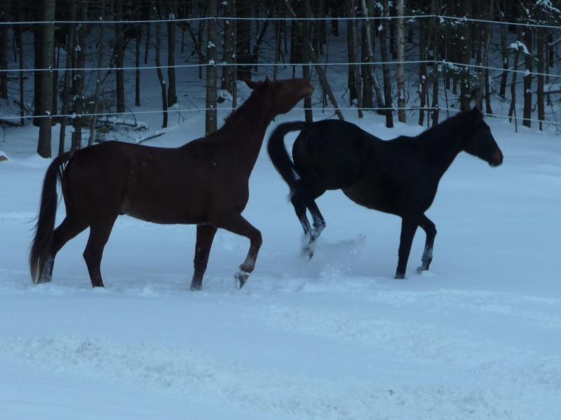 Mes amis les chevaux P1090511