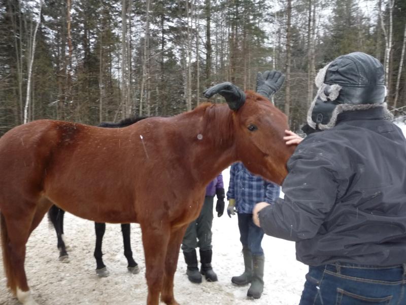 Mes amis les chevaux P1090711
