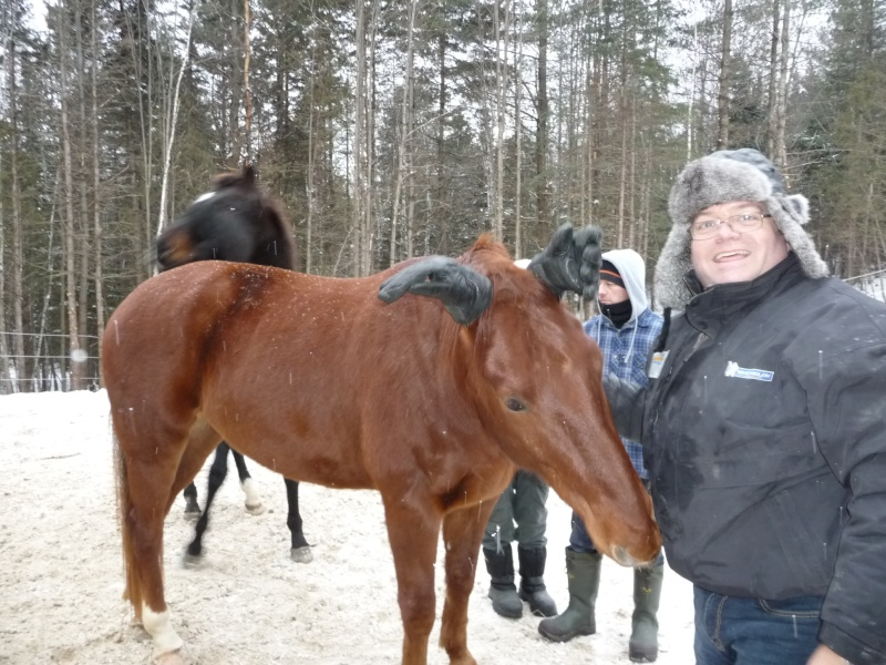 Mes amis les chevaux P1090712