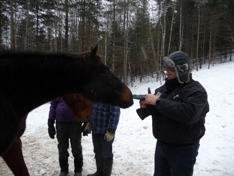 Mes amis les chevaux P1090713