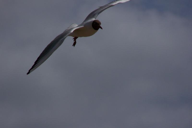 Birds in flight 100_0310