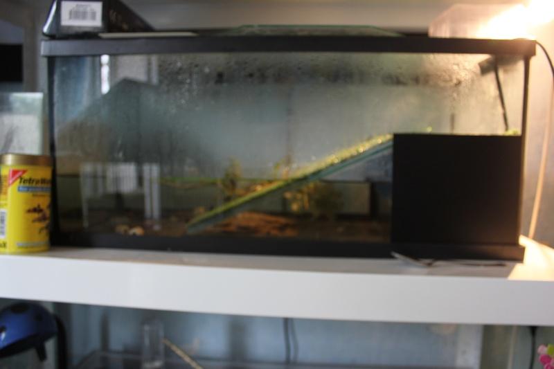 L'aquaterra à Dytiques. Img_3310