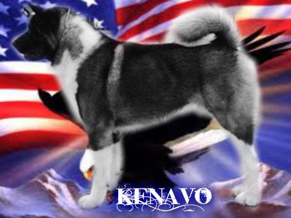 akita americain - renouvellement portée Akita américain Pizap_12
