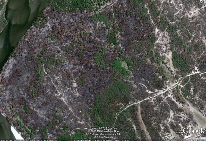 Denuncia en la Direccion de Bosques. Imag210