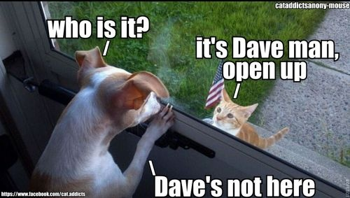 Welcome abaord Dave - Page 2 Dog_ca10