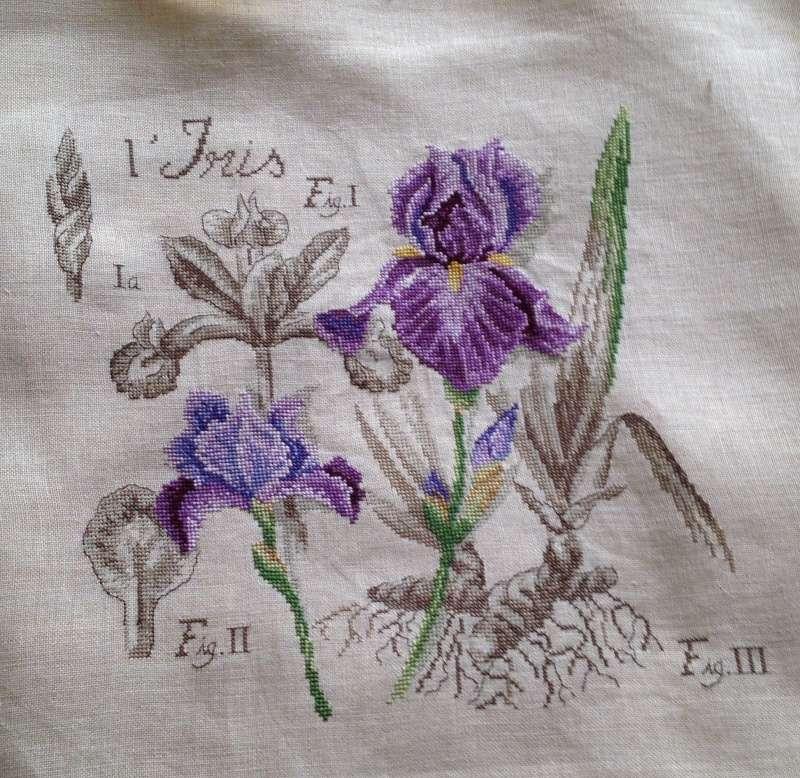 Galerie de Lilubelle - Page 20 Iris710