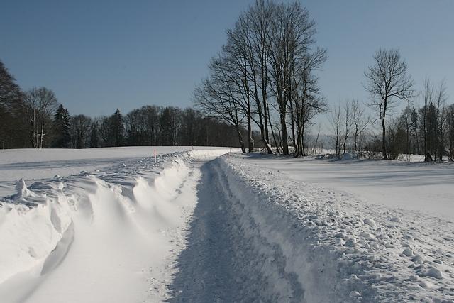 Les perce-neige sont sortis Img_7310