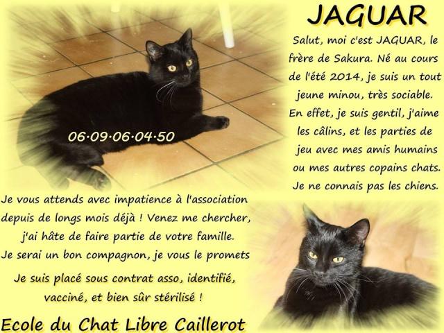 JAGUAR - noir - 06/2014  Jaguar10