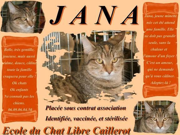 JANA - tigrée - 07/2014 Jana_a10