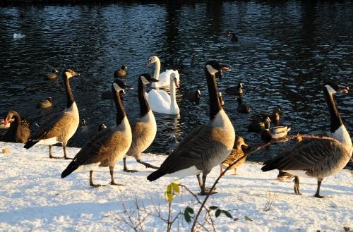 """Concours """"Paysage d'hiver avec animal"""" Noyl_210"""