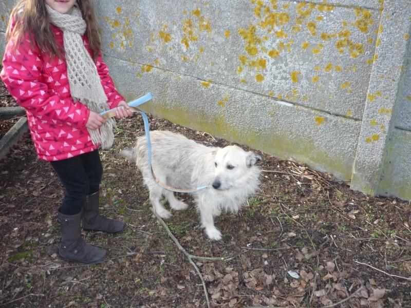 CHOUCHOU (ex ALISTAIR) - Mâle croisé griffon petite taille né en 2006 (PASCANI) - adopté par Julie (dpt 59) - Page 5 P1090711
