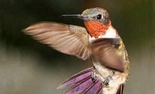 Pourquoi les oiseaux qui migrent volent en V ? 4626_c10