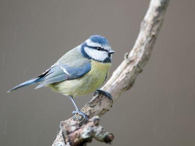 les oiseaux  et autres animaux - Page 5 Phoa0c10