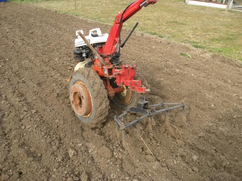 Plantation AIL OIGNON ECHALOTTE Img_0987