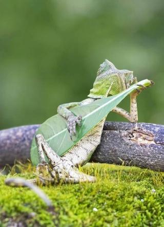 lézards et autres reptiles Photog10