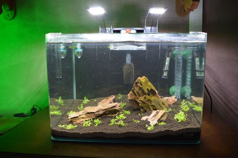 Mise en place iwagumi dans Scaper's Tank Bac_fa10