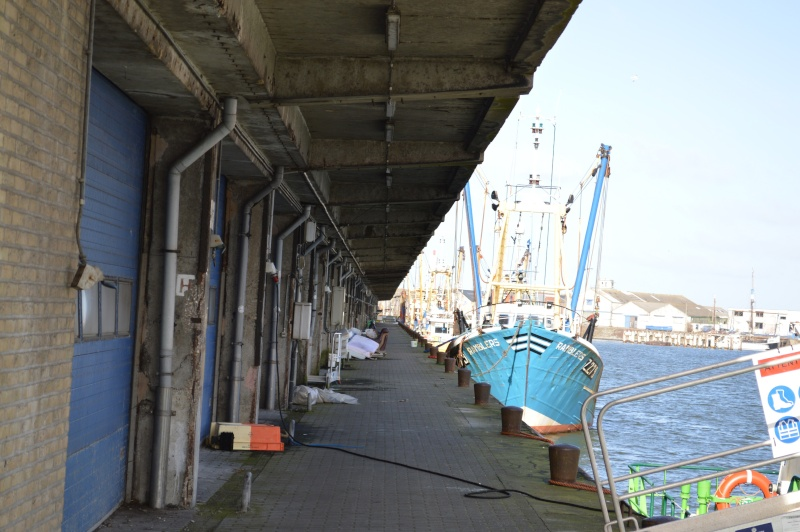 Les nouvelles de Ostende  - Page 5 Dsc_0252