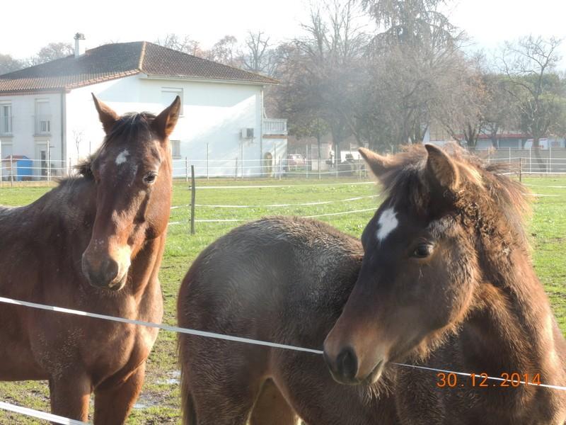Mes chevaux, un mélange d'un peu tout le monde! - Page 10 00310