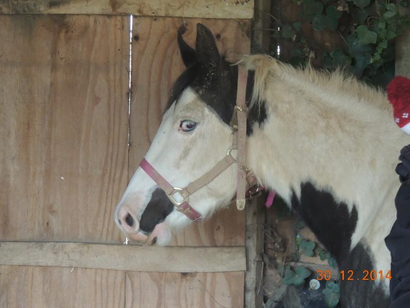 Les chevaux de l'Appaloosa IJ Farm - Page 5 00410