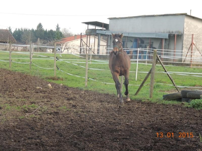 Les poulains né à l'Appaloosa IJ Farm - Page 6 00411