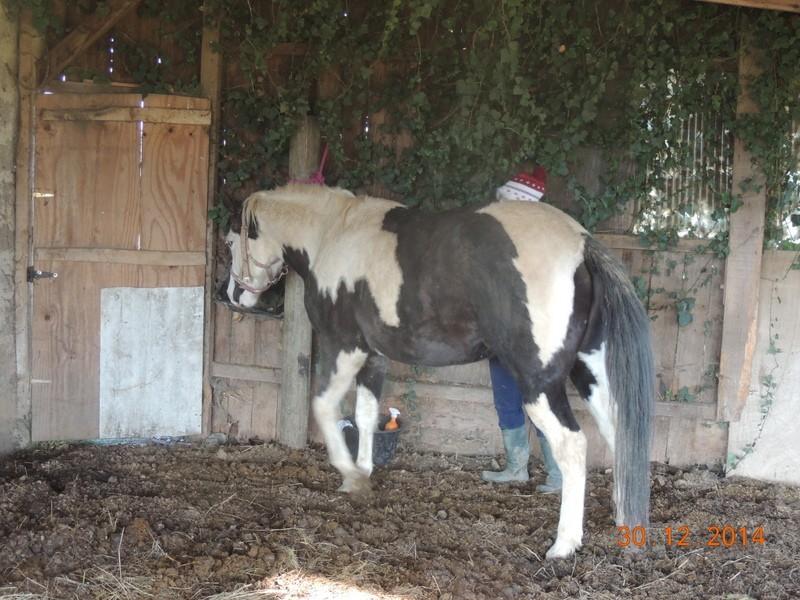Les chevaux de l'Appaloosa IJ Farm - Page 5 00510