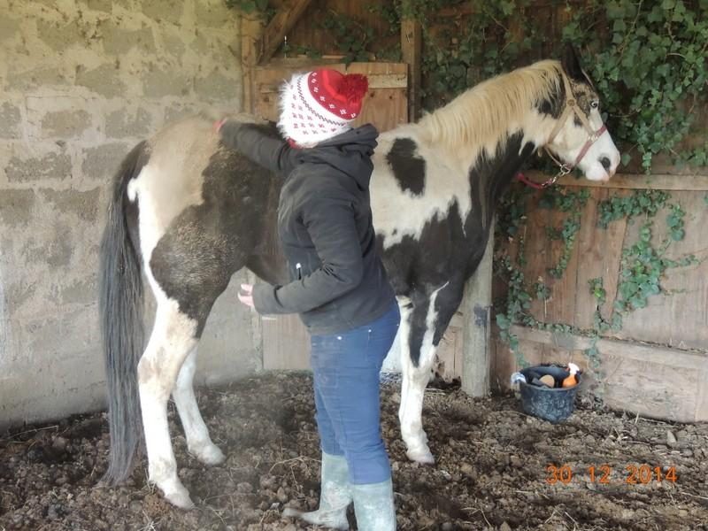 Les chevaux de l'Appaloosa IJ Farm - Page 5 00610