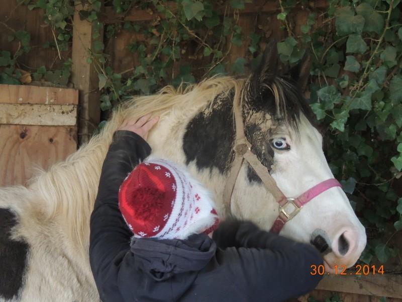 Les chevaux de l'Appaloosa IJ Farm - Page 5 00710