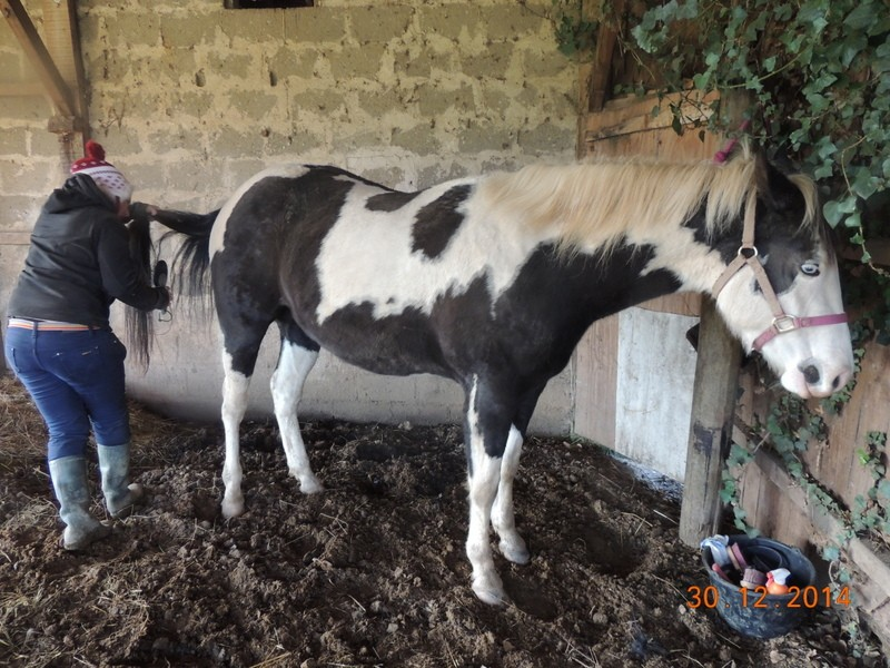 Les chevaux de l'Appaloosa IJ Farm - Page 5 01010