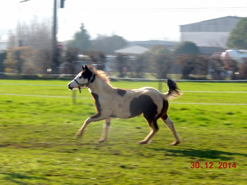 Les chevaux de l'Appaloosa IJ Farm - Page 5 01110