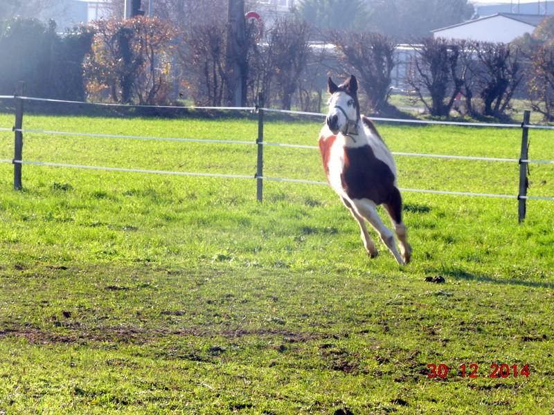 Les chevaux de l'Appaloosa IJ Farm - Page 5 01710