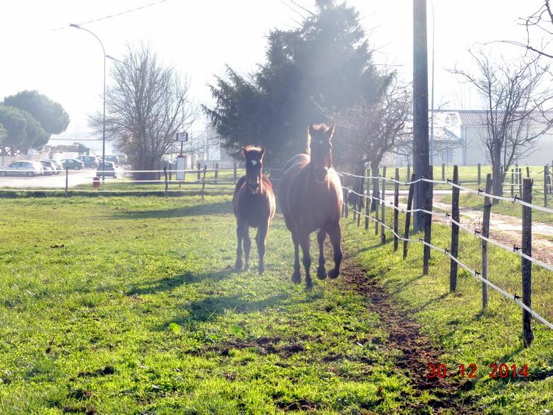Mes chevaux, un mélange d'un peu tout le monde! - Page 10 04210