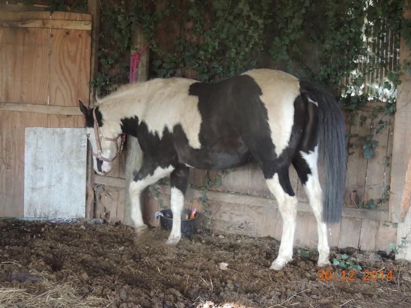 Les chevaux de l'Appaloosa IJ Farm - Page 5 04510