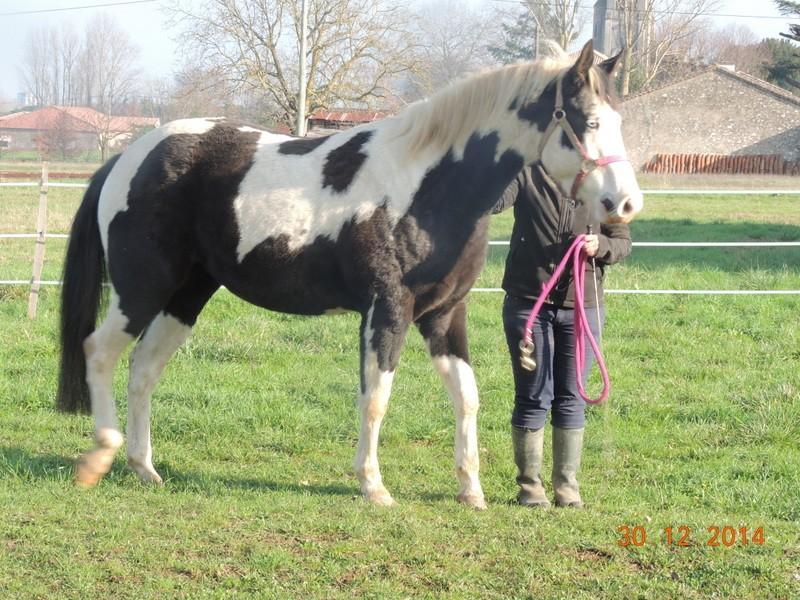 Les chevaux de l'Appaloosa IJ Farm - Page 5 04910