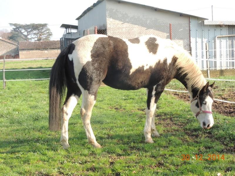 Les chevaux de l'Appaloosa IJ Farm - Page 5 05210