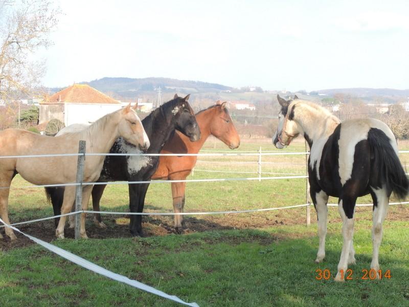 Mes chevaux, un mélange d'un peu tout le monde! - Page 10 05310