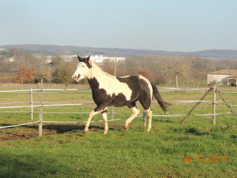 Les chevaux de l'Appaloosa IJ Farm - Page 5 06610