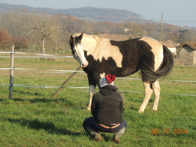 Les chevaux de l'Appaloosa IJ Farm - Page 5 06711