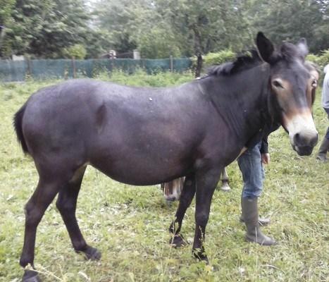 VIOLETTE dite PETALE - ONC Mule née en 2006 - adoptée en octobre 2012 par Jean 2014_610