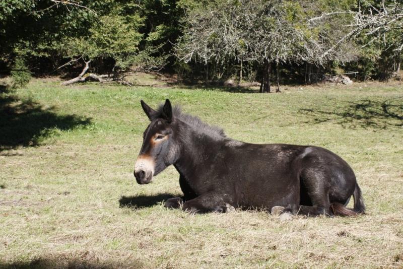 VIOLETTE dite PETALE - ONC Mule née en 2006 - adoptée en octobre 2012 par Jean 2014_910