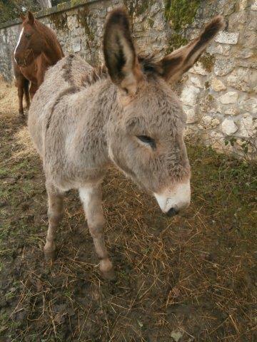 BOURIQUET - ONC âne né en 2009 - adopté en août 2017 par Marie - Page 2 2015_113