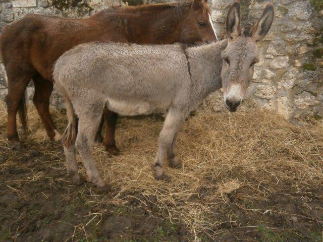 BOURIQUET - ONC âne né en 2009 - adopté en août 2017 par Marie - Page 2 2015_115