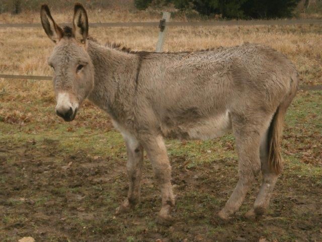 BOURIQUET - ONC âne né en 2009 - adopté en août 2017 par Marie - Page 2 2015_117