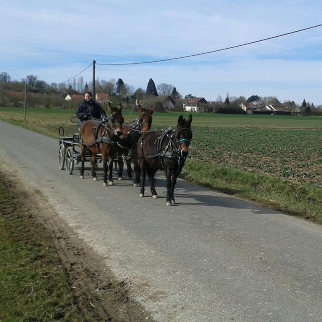 Mon projet d'attelage à 4 mules pas à pas ... - Page 3 10299110