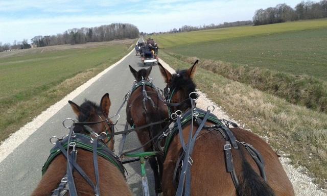 Mon projet d'attelage à 4 mules pas à pas ... - Page 3 11015110