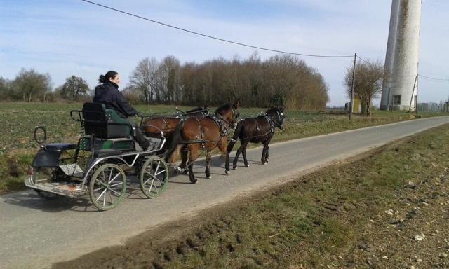 Mon projet d'attelage à 4 mules pas à pas ... - Page 3 11037310