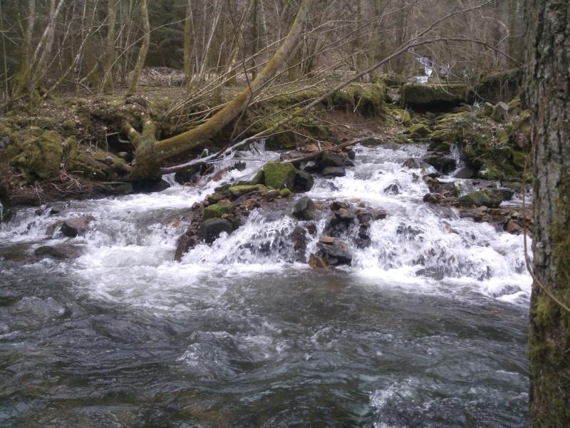 Pêche de la truite en rivière (vosges). Wp_00010