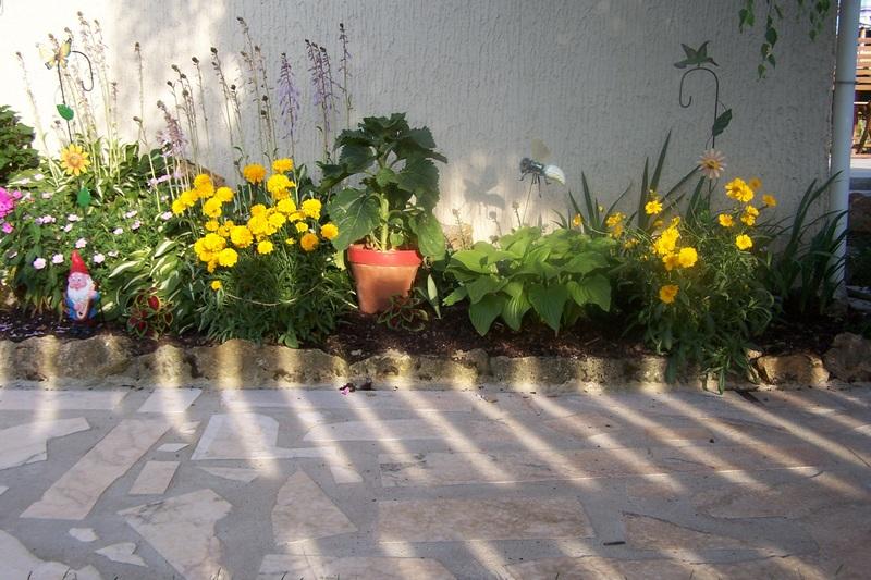 Association de plantes dans vos massifs  100_0810