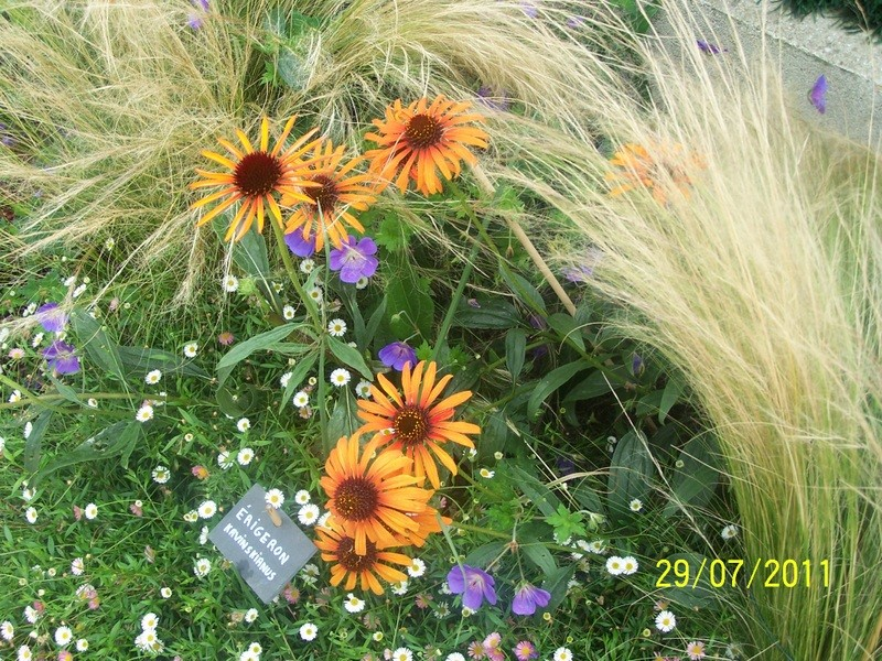 Association de plantes dans vos massifs  100_1910