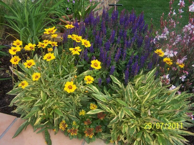 Association de plantes dans vos massifs  100_1911