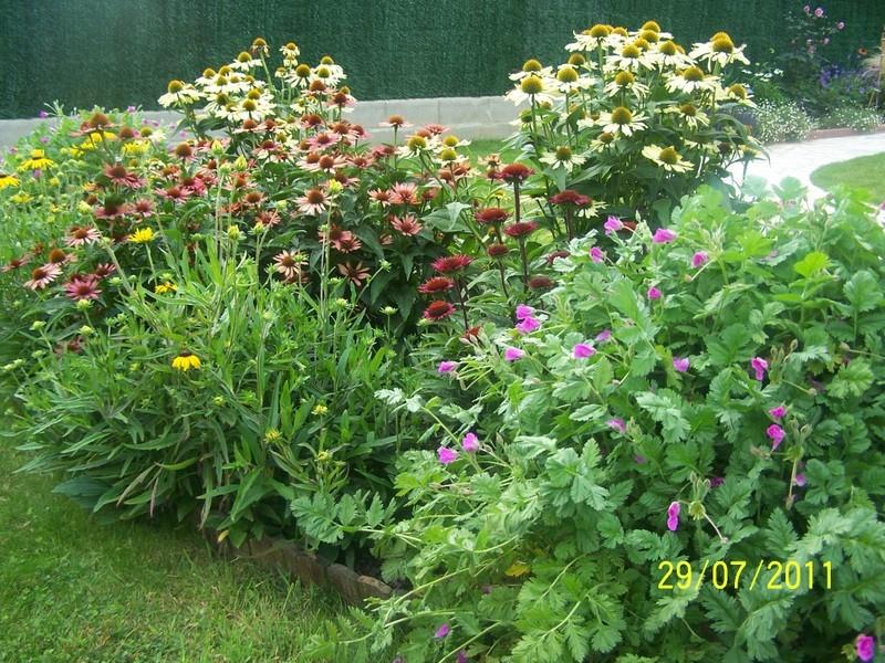 Association de plantes dans vos massifs  100_1912